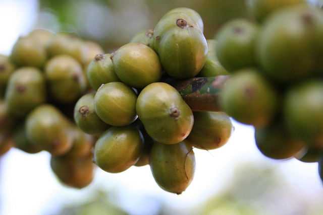 Coffee, Beans, Green, Unripe, Plants, Fruits, Berries