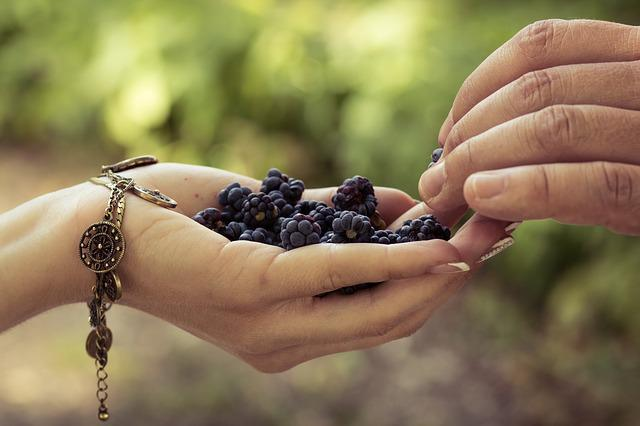 Hand, Nature, Outdoors, Food, People, Berry