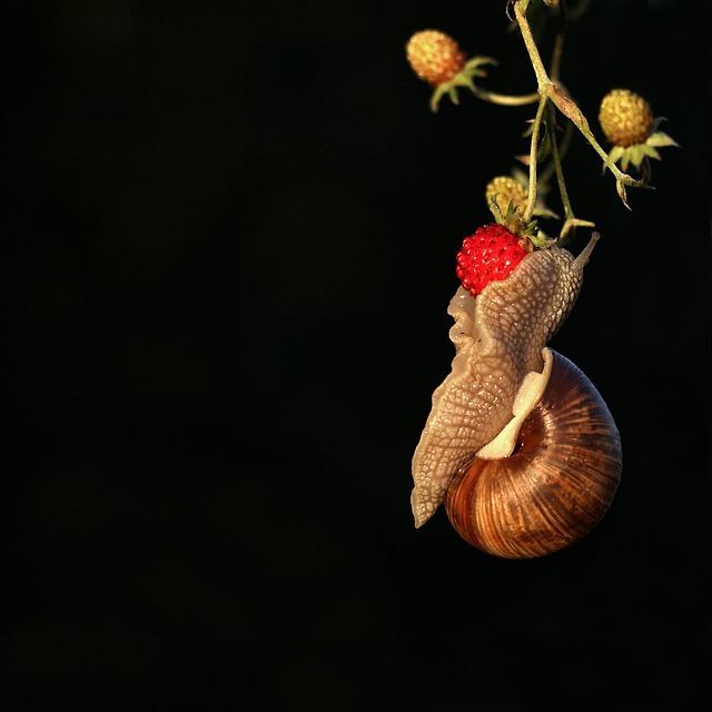 Snail, Mollusc, On, Wild Strawberry, Berry