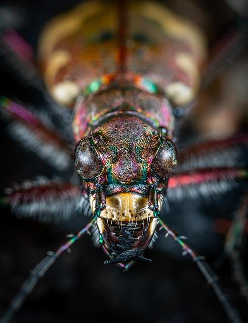 Bespozvonochnoe, Insect, Beetle, Living Nature