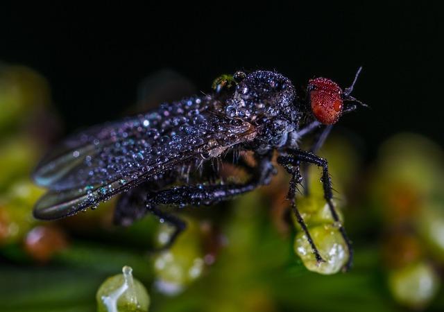 Insect, Nature, Bespozvonochnoe, Living Nature, No One
