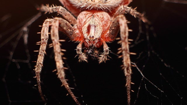 Spider, A Spider-like Insect, Insect, Bespozvonochnoe