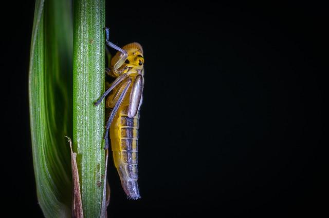 Insect, No One, Bespozvonochnoe, Living Nature, Nature