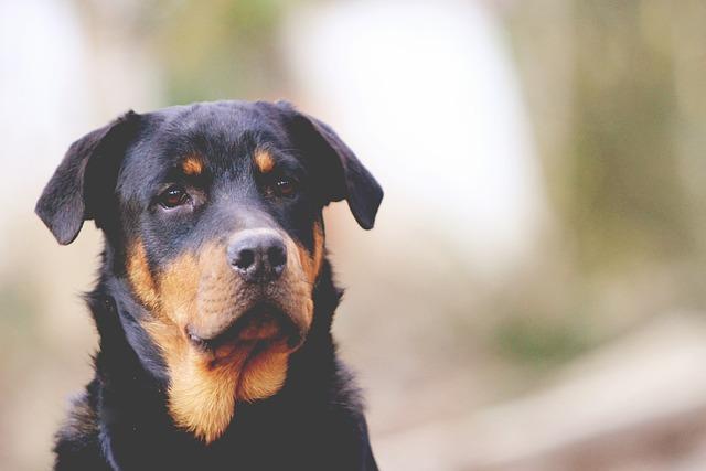 Best, Friend, Dog