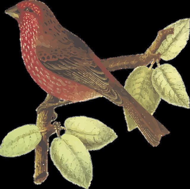 Animal, Bhutan, Bird, China, Finch, India, Nepal