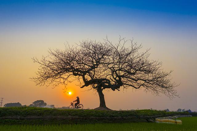 Sunset, Afternoon, Bicycle, Lonely, Tree, Landscape