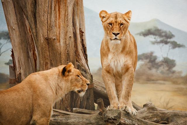Africa, Animal, Big, Carnivore, Cat, Feline, Female