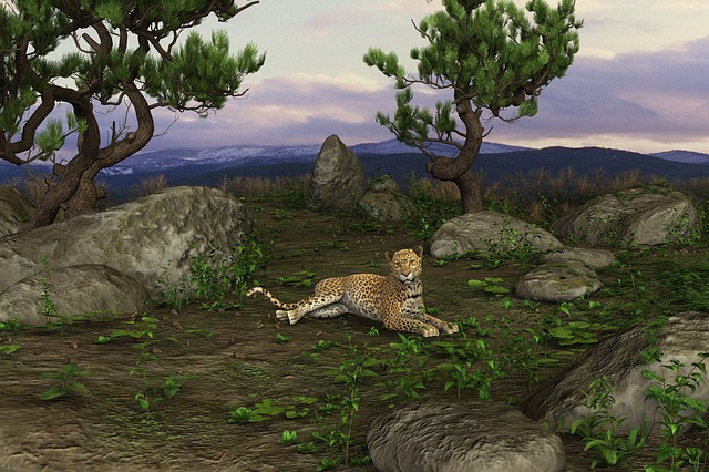 Cheetah, Big Cat, Concerns, Cat, Predator, Wildcat
