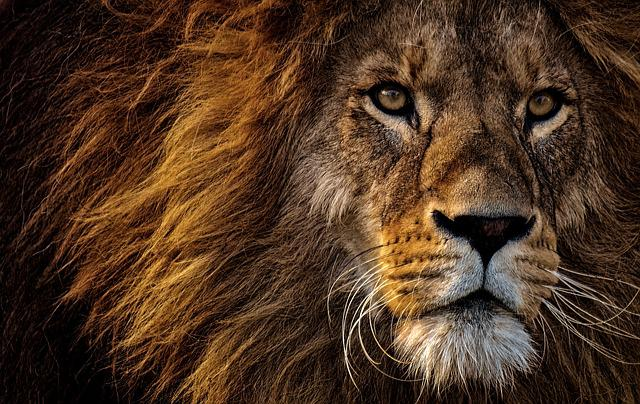 Lion, Predator, Dangerous, Mane, Big Cat, Male, Zoo