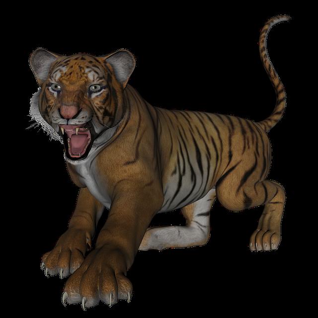 Tiger, Big Cat, Cat, Predator, Wildcat, Bengal, Feline