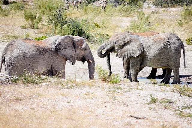 Elephant, Wildlife, Game, Big Five, Trunk, Safari