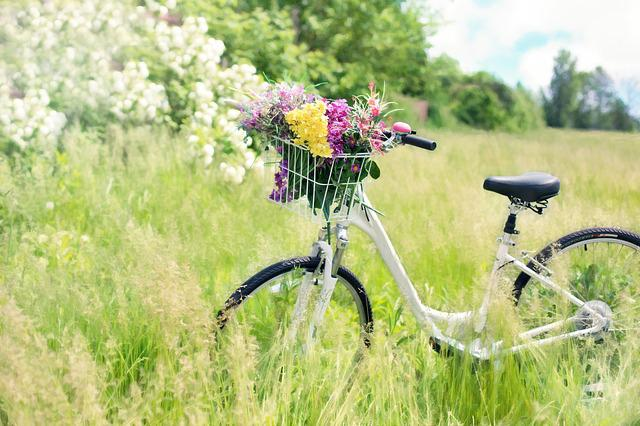 Bicycle, Meadow, Flowers, Grass, Bike, Spring, Green
