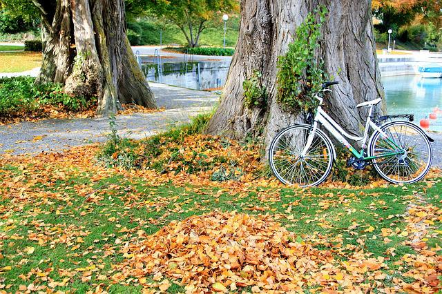 The Old Tree, Autumn Gold, Foliage, October, Bike, Park