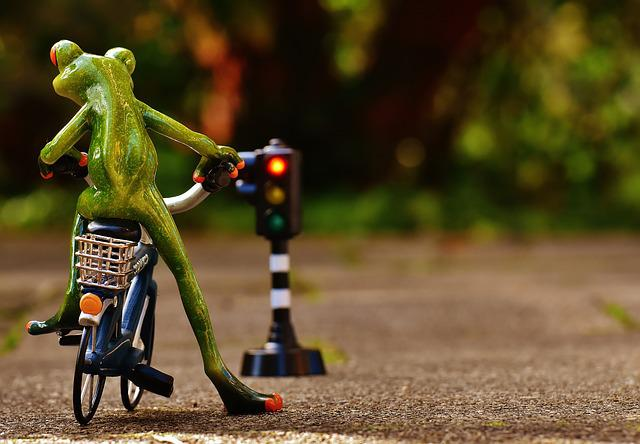 Frog, Fig, Bike, Rules Of The Road, Traffic Lights, Red