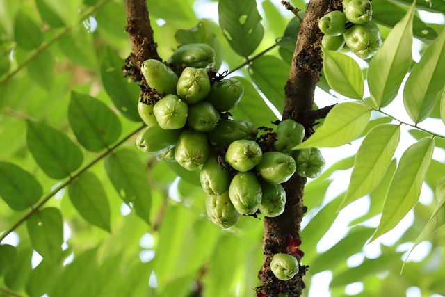 Bilimbi, Fruit, Green, Kerala, Nature, Flowers, Summer