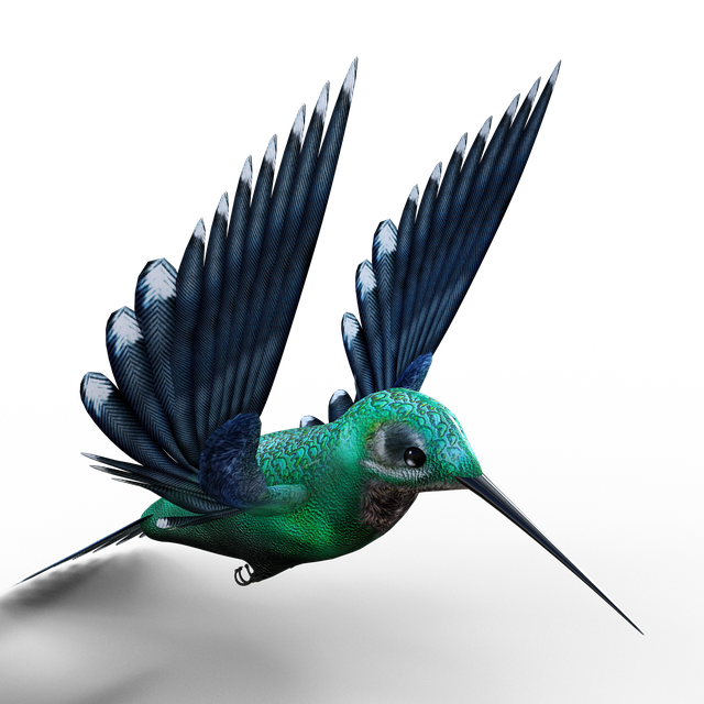 Hummingbird, Birds, Bill, Feather, Fly, Foraging
