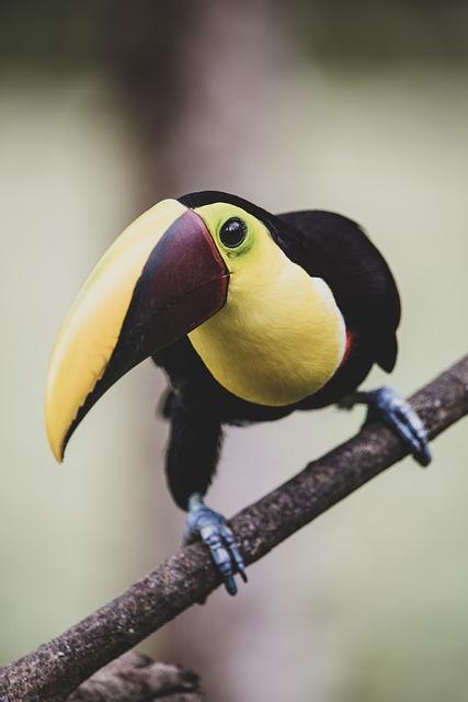 Toucan, Bird, Branch, Perched, Beak, Bill, Animal