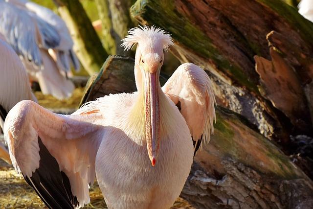 Pelikan, Water Bird, Pink Pelican, Bill, Bird, Animal