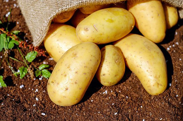 Potatoes, Vegetables, Erdfrucht, Bio, Harvest, Garden