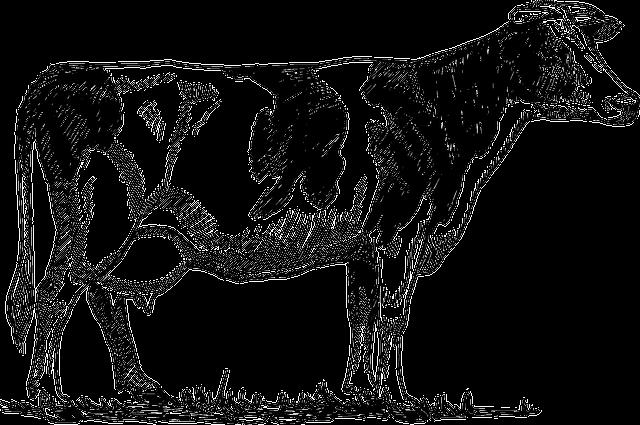 Cattle, Cow, Animal, Biology, Bovine, Farm, Mammal