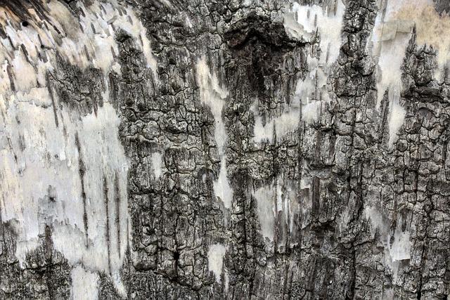 Birch, Bark, Birch Bark, Background