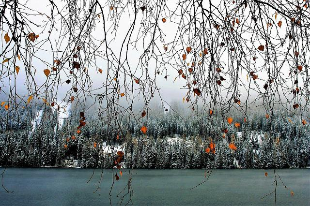 Winter, Lake, Leaves, Birch, Branches, Twigs, Foliage
