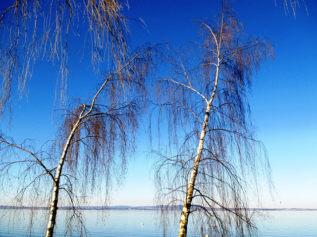 Trees, Birch Lake, Lake Constance, Romanshorn, Thurgau