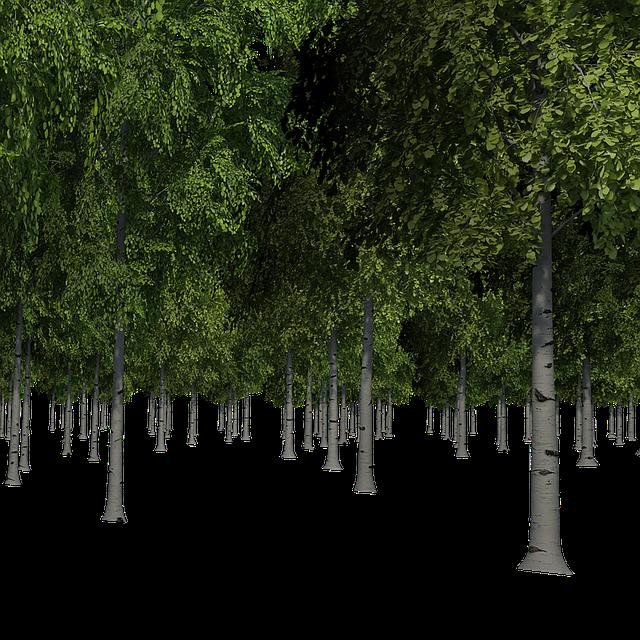 Forest, Trees, Birch, Landscape, Nature, Forests, Bark