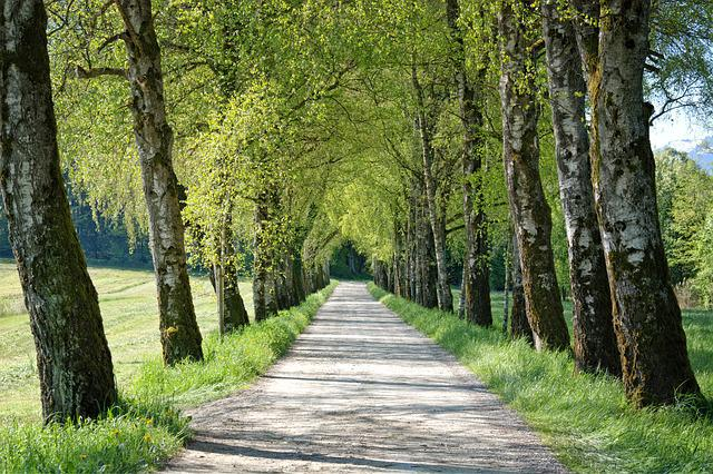 Spring, Avenue, Trees, Birch, Away, Road, Gravel Road