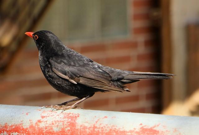 Bird, Animal World, Nature, Animal, Feather, Blackbird