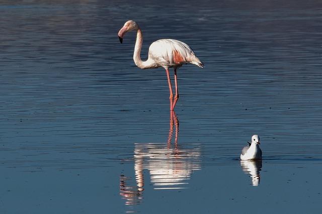 Flamingo, Bird, Water, Wildlife, Lake, Nature, Animal