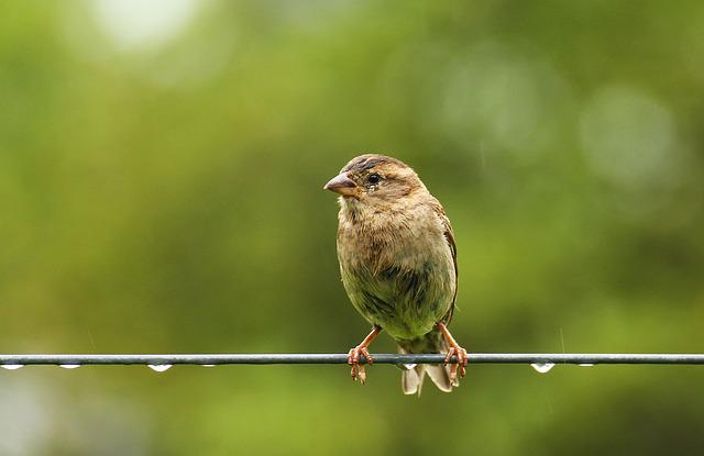 Sparrow, Bird, Fair Is Fair, Beak, Animal, Nature