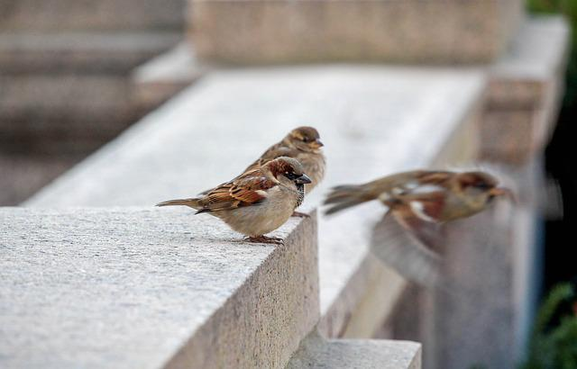 Bird, Nature, Outdoors, Sparrow, Animal