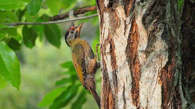 Tree, Nature, Wood, Wildlife, Bird, Wild, Animal