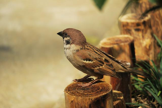 Bird, Nature, Wildlife, Animal, Outdoor, Wild, Compact