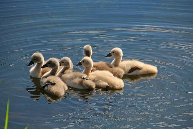 Bird, Waters, Animal World, Nature, Feather, Lake, Pond
