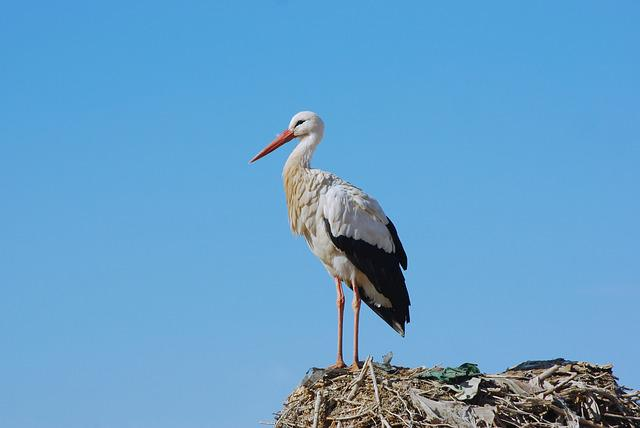 Marrakech, Bird, Stork, Nest, Animals