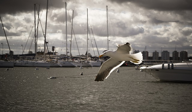Bird, Seagull, Ave, Beach, Wings, Sky, Sea, Cloudy