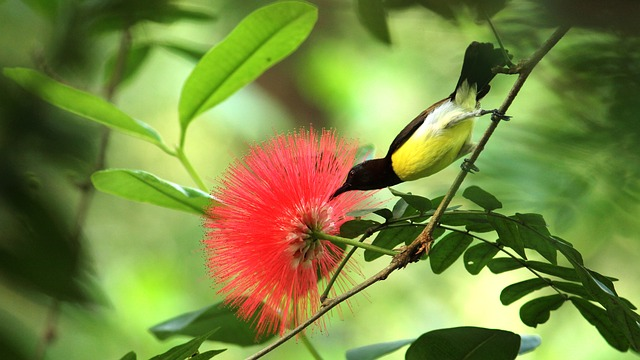Bird, Avian, Purple, Sunbird, Purple Rumped Sunbird