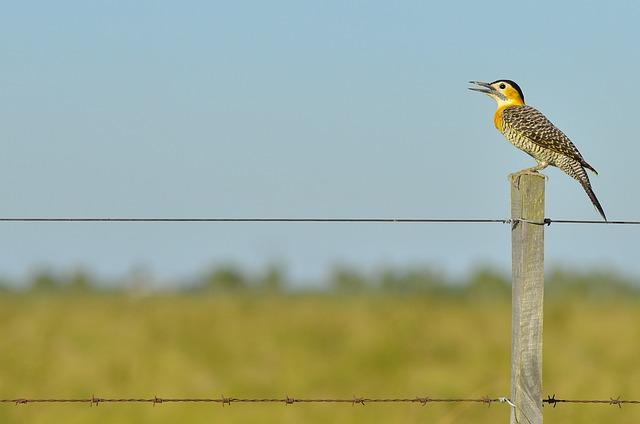 Animal, Barbed Wire, Beak, Bird, Color, Daylight