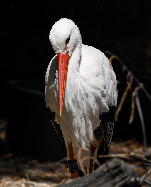 Animals, Bird, Stork, Animal Portrait, Bill, Feather