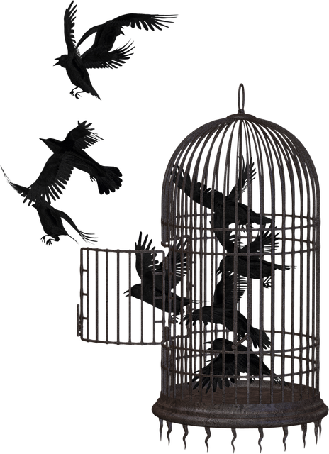 Crow, Bird Cage, Cage, Bird, Animal, Freedom, Flight
