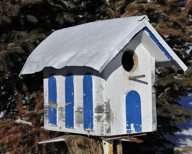Bird House, Bird, Birdhouse