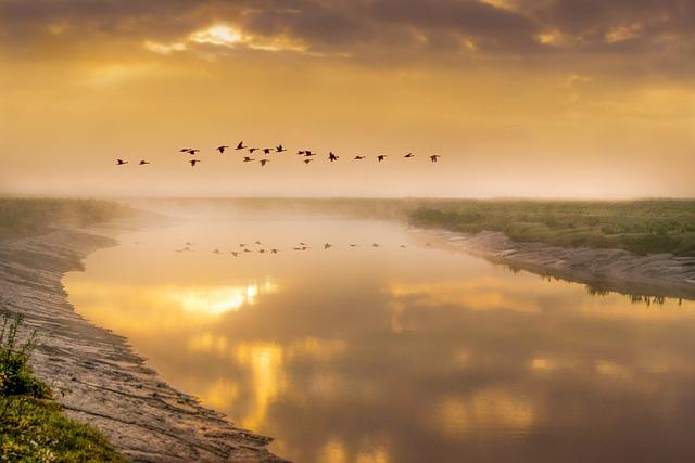 Birds In Flight, Geese, Bird, Animal, Flight, Flying