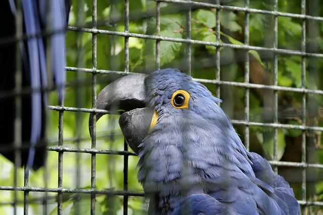 Ara, Bird, Parrot, Plumage, Parrots, Blue, Ara Ararauna