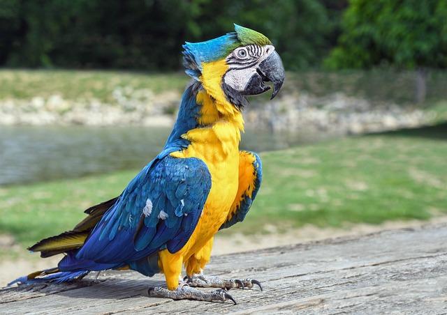 Parrot, Ara, Bird, Blue Macaw