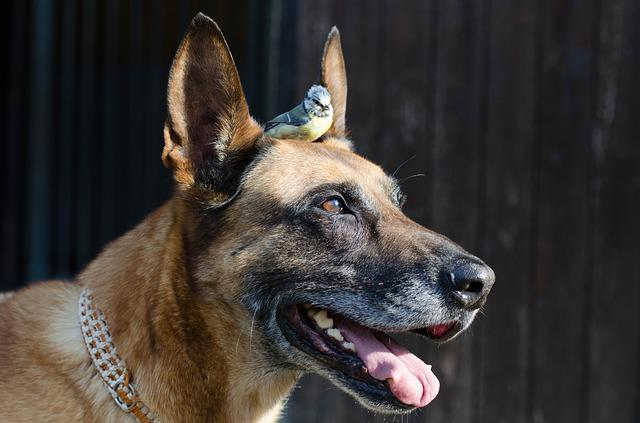 Dog, Blue Tit, Malinois, Bird, Baby Animal, Pet, Sweet