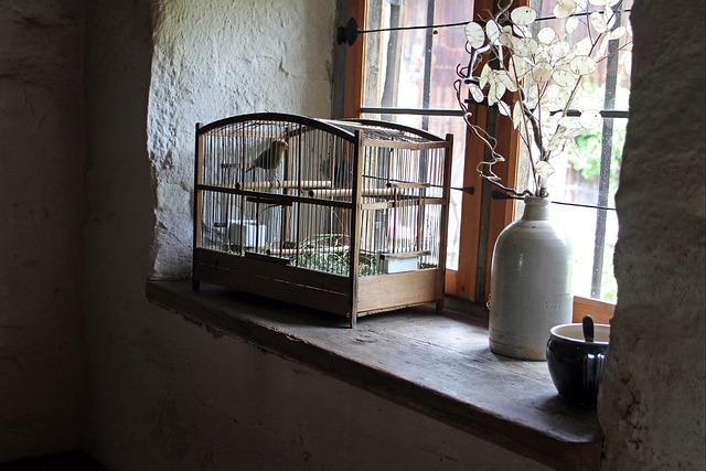 Bird Cage, Cage, Window Sill, Bird, Imprisoned
