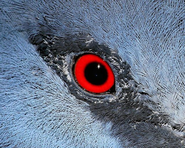 Eye, Macro, Bird, Fan-deaf, Close Up, Nature, Mirroring