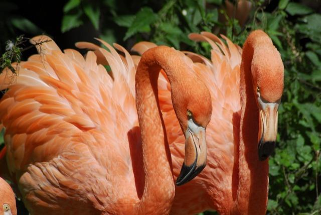 Nature, Bird, Color, Flamingo, Plumage
